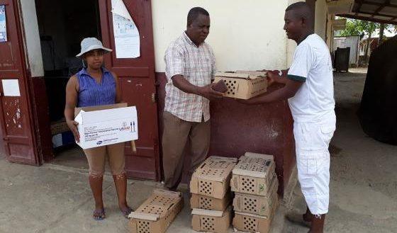 Sambava Éleveurs Distribution de jeune poulet de chair